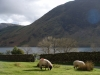 Crummock-water-15-of-19