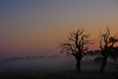Picture of two bare trees with the sun rising behind and mist on the ground