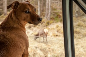 Jack looking out of the window at a deer